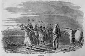 Native Labour 2